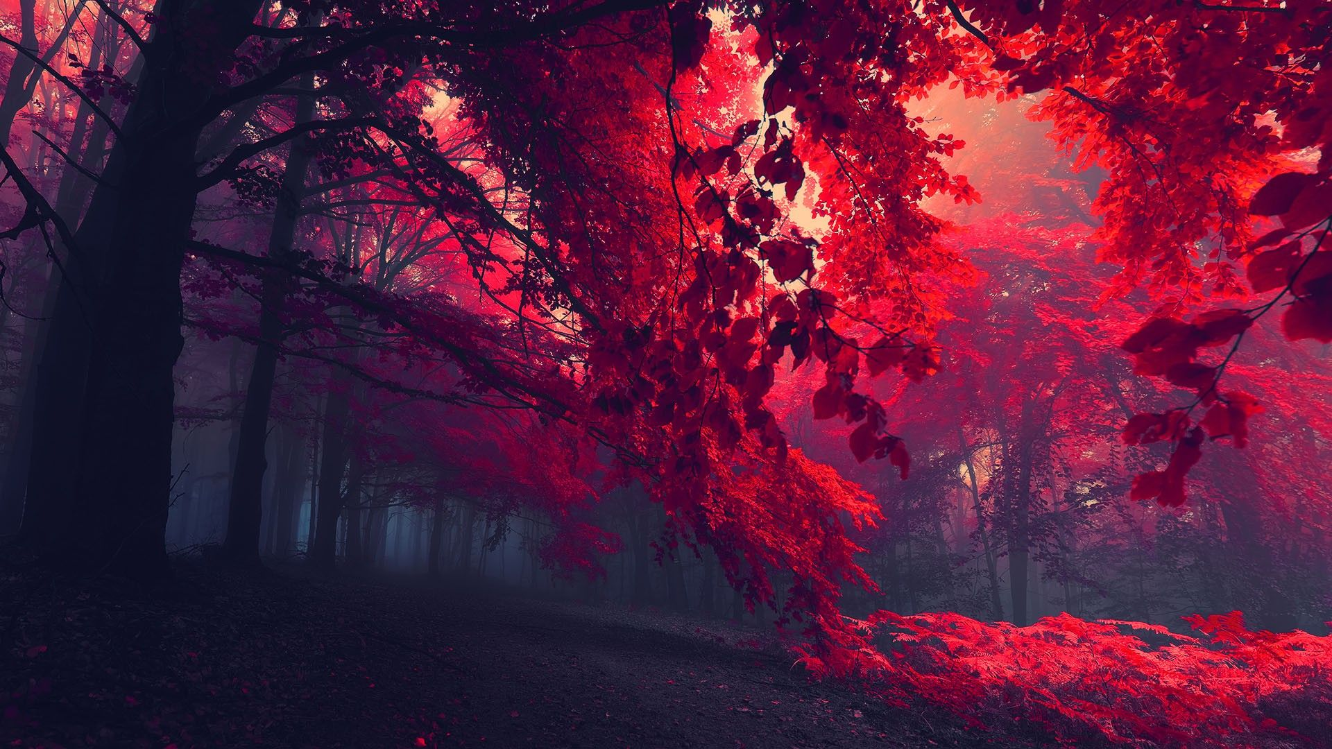 Red Forest Trees HD Wallpaper » FullHDWpp Full HD Wallpapers