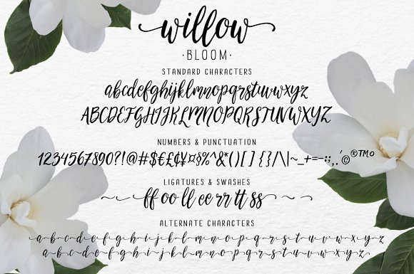 Modern calligraphy font Willow Bloom ~ Script Fonts ~ Creative Market
