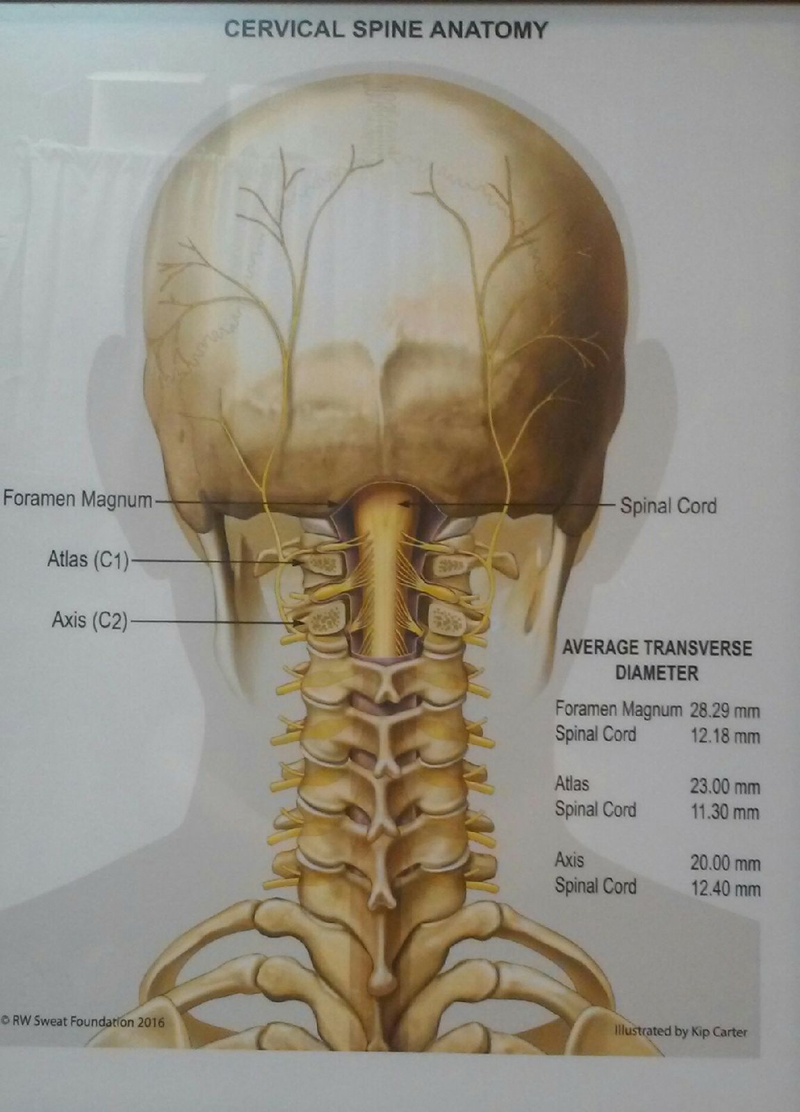 Cervical Spine Anatomy Poster 18×24 | Sweat Institute