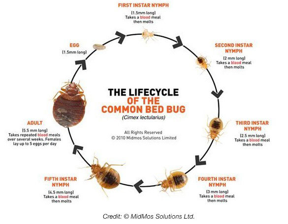 Bed Bug Blog: Learn How to Get Rid of Bed Bugs