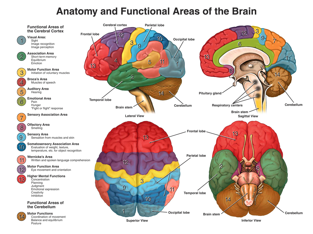 What are the brain functions at the electrode placement? Using