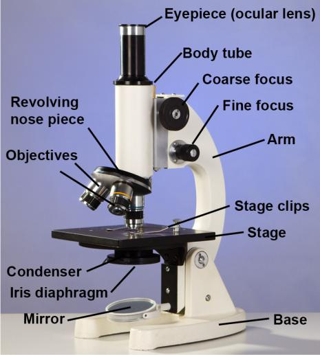 Compound Light Microscope: Amazon.com